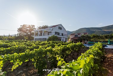 The old family vineyard in our holiday villa near the sea