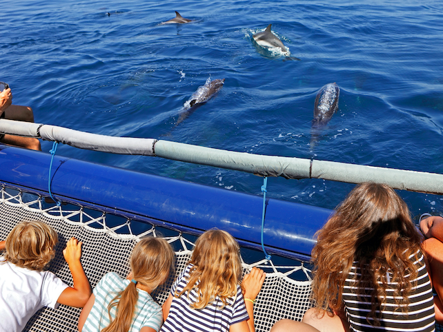four-children-on-a-boat-looking-at-the-dolphins-swimming-in-the-sea