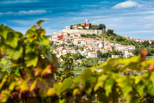 view-of-the-town-of-motovun-through-wine-grooves-with-autumn-colours