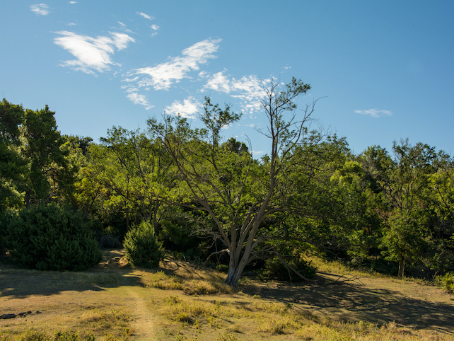 lush, green forest on the island of Rab with clear blue sky above on a sunny day