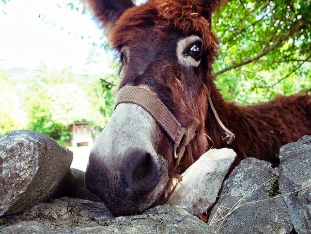 brown-donkey-on-a-farm-property-resting-in-the-shadow-of-a-large-tree