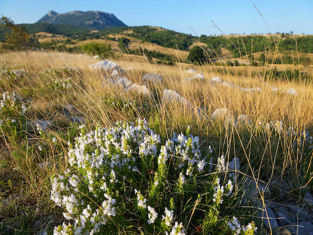 white alpine flowers and high grass on stony ground in a mountain landscape